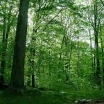 Timelapse : 15 mois d'une forêt en 3 minutes